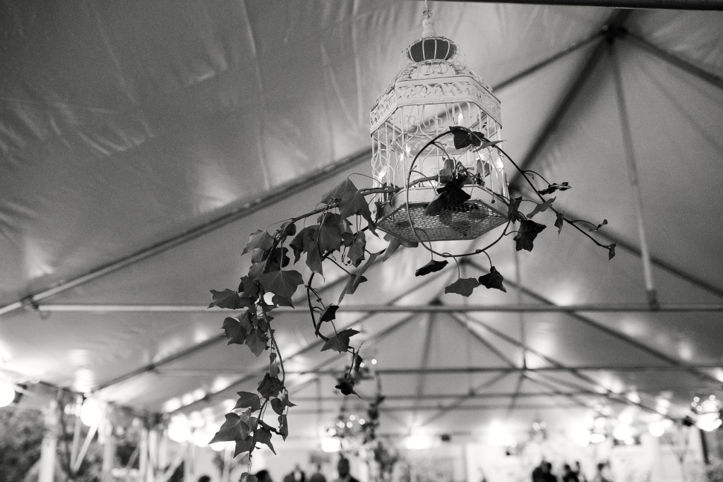 River Farm VA wedding spring tent botanical birdcage vines
